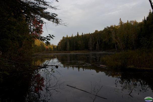 Beaver Pond At The Field School