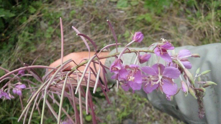 Edible Plant Workshop Series Update