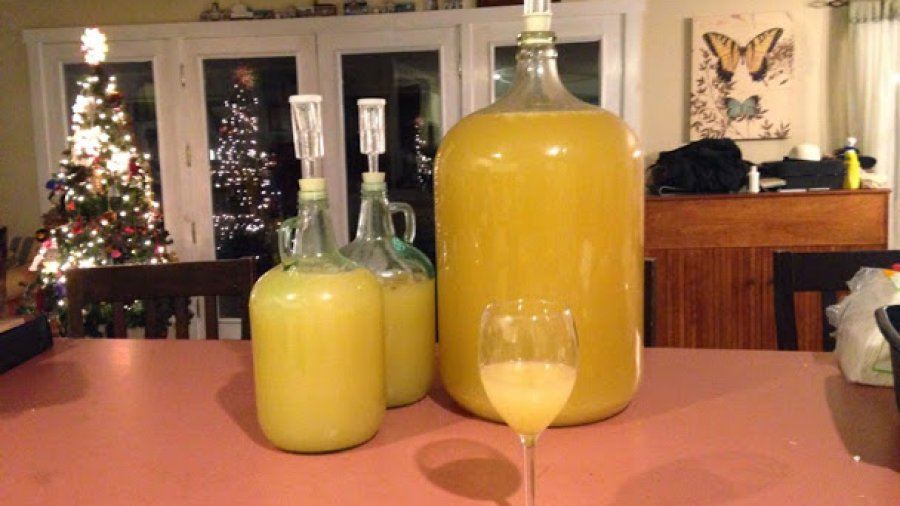 7 gallons of Ankle Breaker apple wine done bubbling just in time for new years