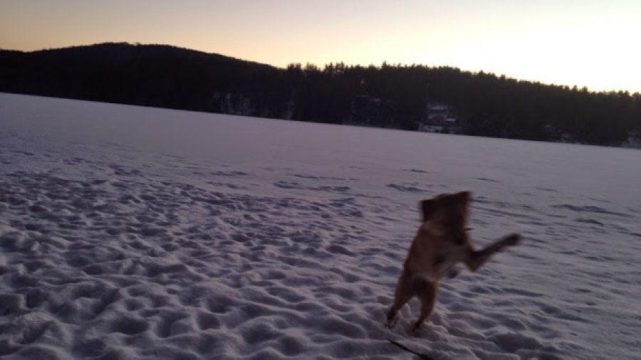 Lucky dog pouncing during a twilight walk on the pond