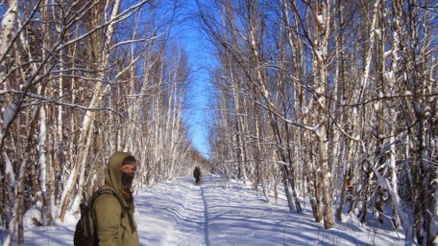 Snowshoeing Through The Birches
