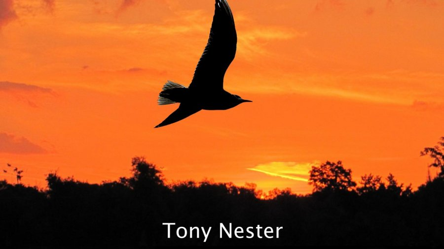 Book Review: Life Under Open Skies by Tony Nester
