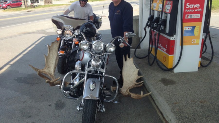 My friend Charlie's motorcycle with moose antlers mounted