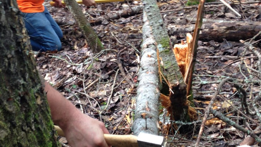 Using axes in the woods