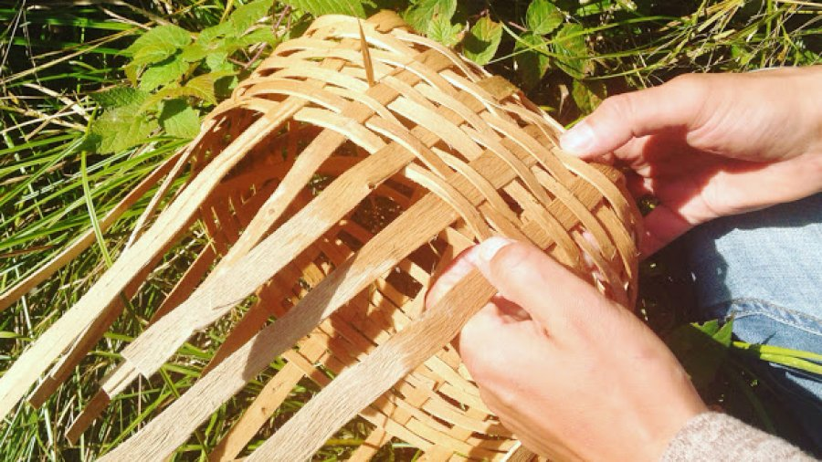 Brown ash basketry in camp today