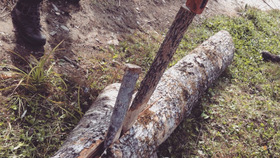 Splitting a brown ash log with wooden wedges, to be pounded into pack basket splints