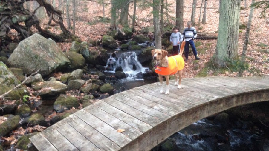 Boys, dog and I hiked to the bridge and had hot chocolate to celebrate black Friday
