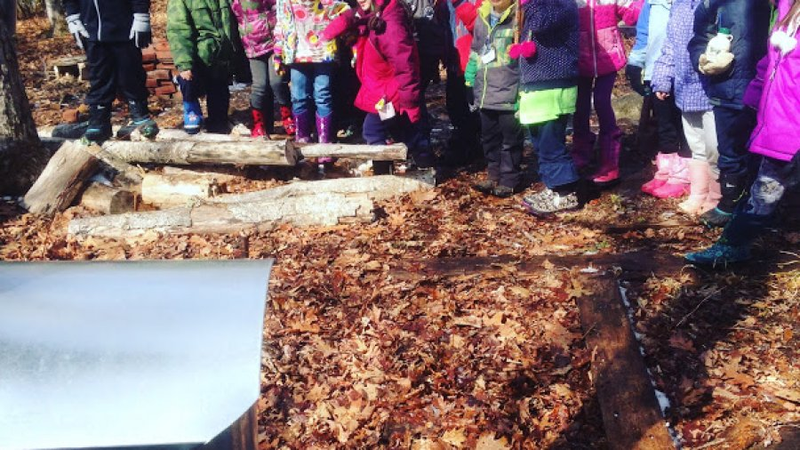 Tapping trees and boiling sap into maple syrup with a bunch of kids