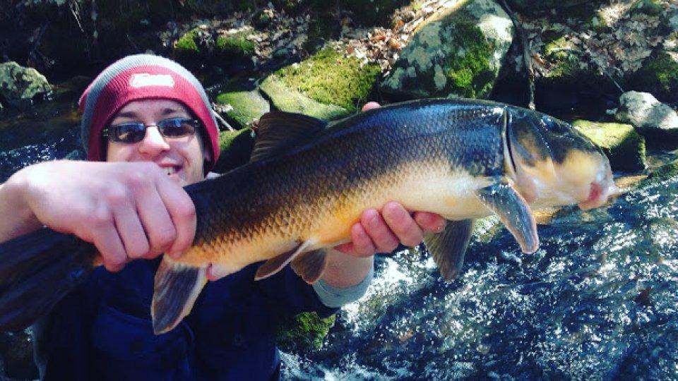 Barehand fishing: no hook, no net, no spear