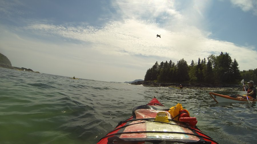 Sea Kayak Guide License A Long Time Coming