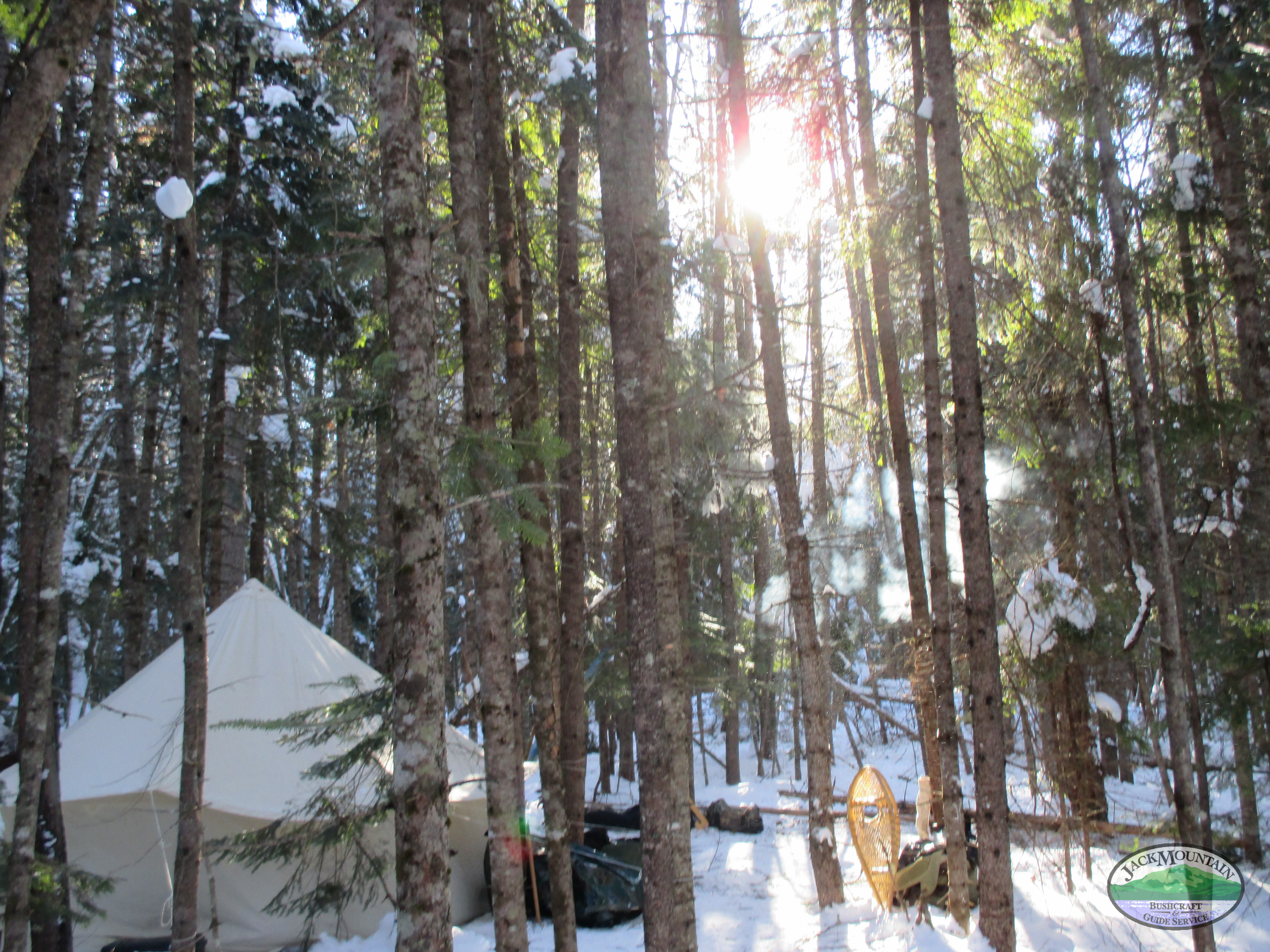 On The Trail: Morning Sun Through The Trees