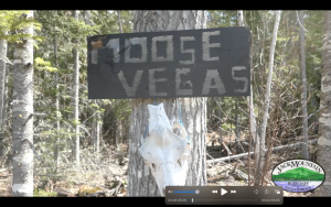 Moose Vegas Sign