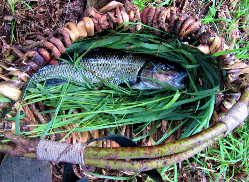 """The Traveling Stock Pot; Making The Most Of """"Trash"""" Fish On Long Canoe Expeditions"""