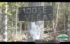 Moose Vegas Sign