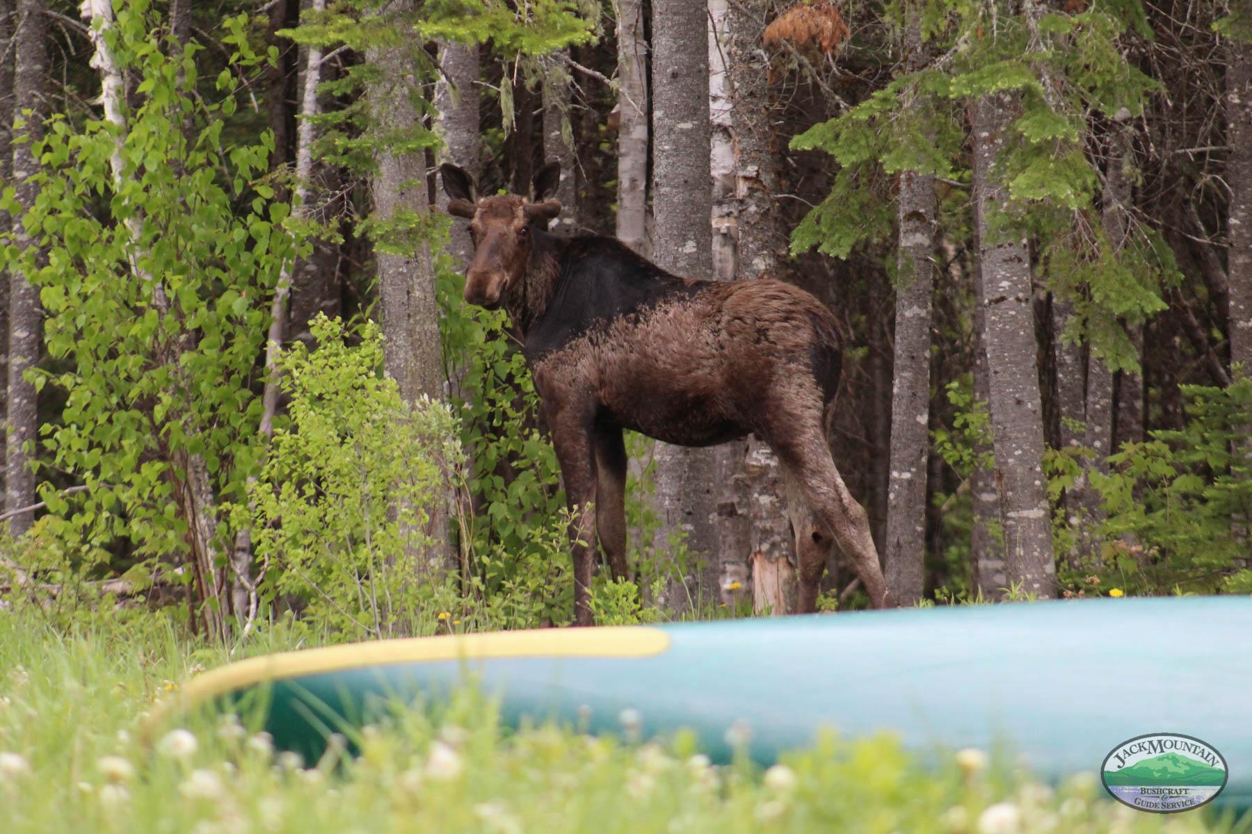 Fall Wilderness Bushcraft Semester Update: 4 Spots Remaining